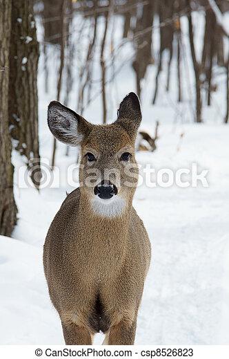 Virginia deer - csp8526823