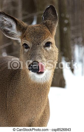 Virginia deer - csp8526843