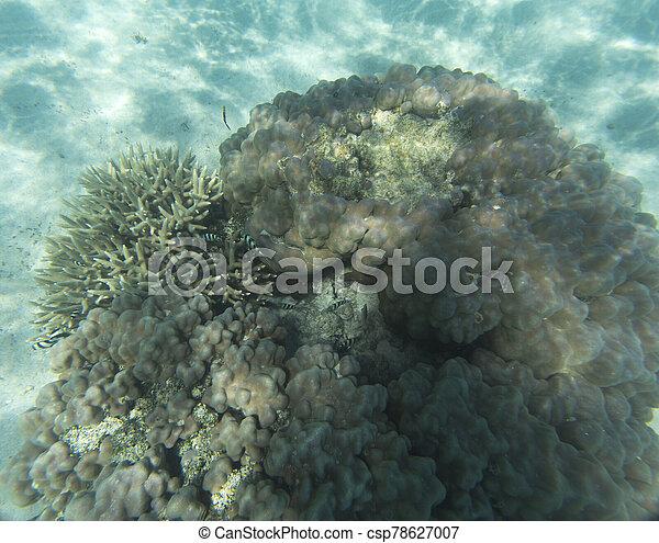 vista, hermoso, barrera coralina - csp78627007