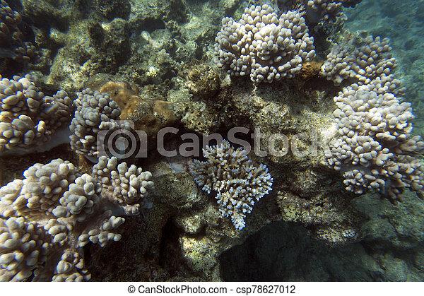 vista, hermoso, barrera coralina - csp78627012