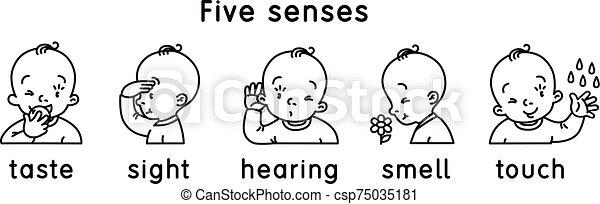 vista, icon., sapore, udienza, sensi, cinque, tocco, odore - csp75035181