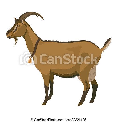 Cabra marrón, vista lateral, aislada - csp22326125