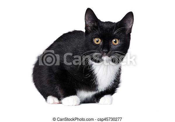 Vista lateral de gatito negro mentiroso aislado en blanco - csp45730277
