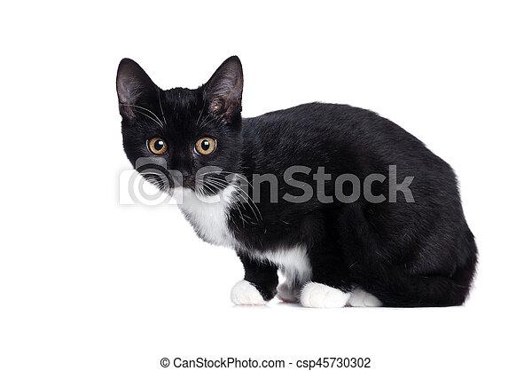 Vista lateral de un gatito negro - csp45730302