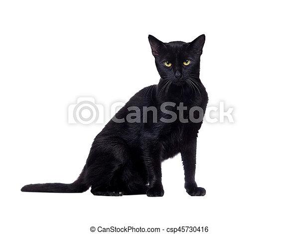 Retrato lateral de un gato negro sentado - csp45730416