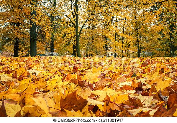 vita, foglie, giallo, autunno, ancora, acero - csp11381947