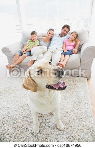 vivant, labrador, famille, séance, chouchou, tapis, divan jaune, leur, maison, heureux, salle - csp18674956