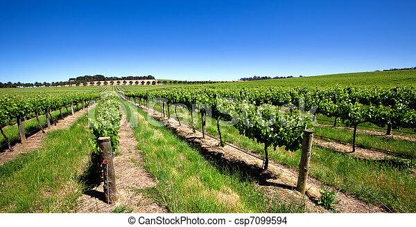 Vivid Green Vineyard - csp7099594