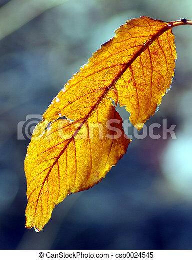 Vivid yellow - csp0024545