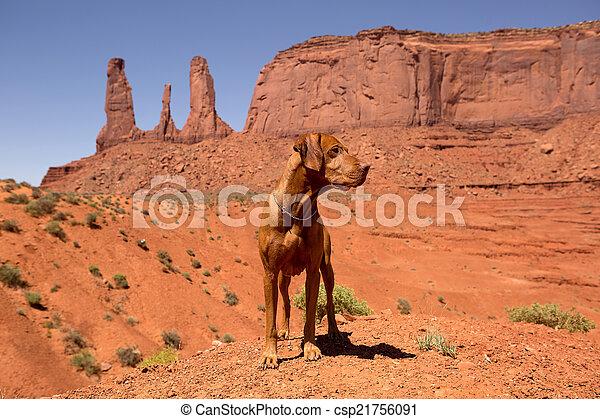 vizsla dog standing in red desert - csp21756091