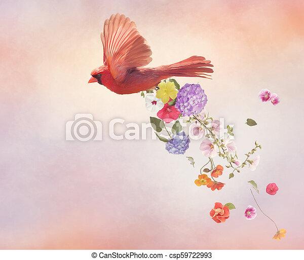 vliegen, bloemen, kardinaal, noordelijk - csp59722993