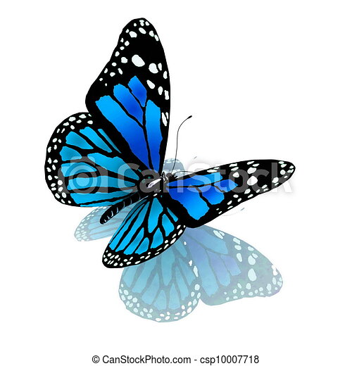 vlinder, blauwe , witte , kleur - csp10007718