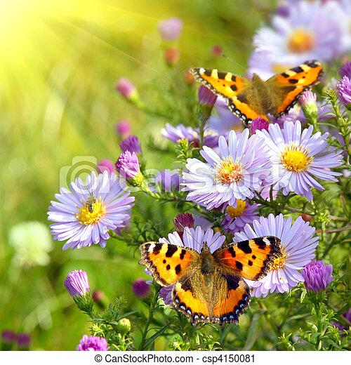 vlinder, bloemen, twee - csp4150081
