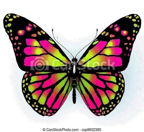 vlinder, colo, helder, vrijstaand - csp9932380