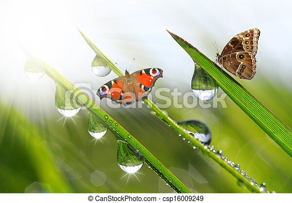 vlinder, dauw - csp16009249