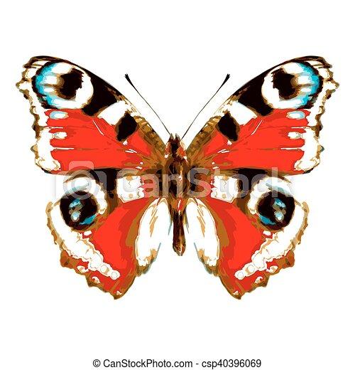 vlinder, kleur, vrijstaand, witte  - csp40396069