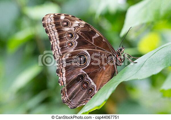 vlinder, profiel, verticaal - csp44067751