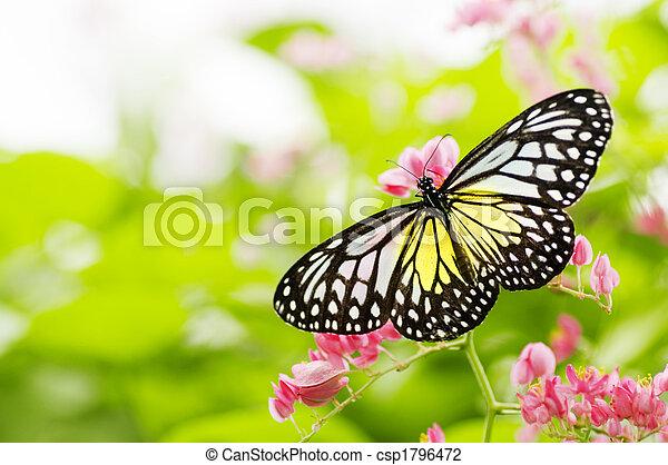 vlinder - csp1796472
