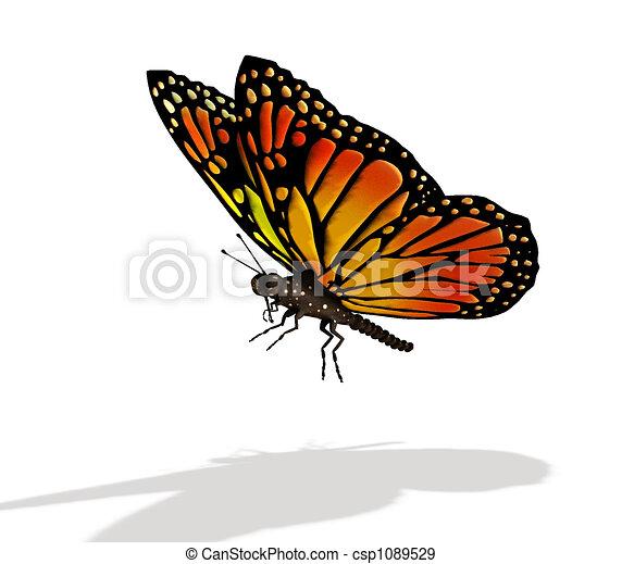 vlinder - csp1089529