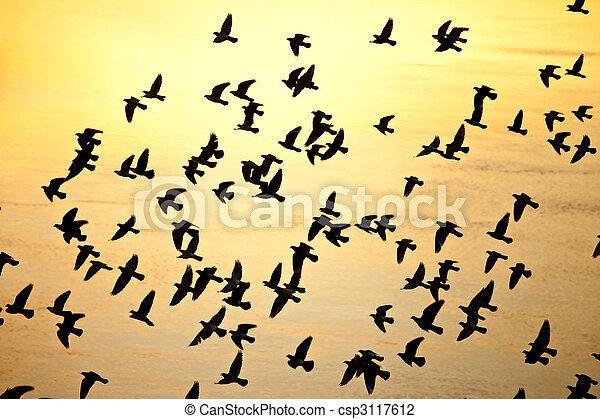 vlucht, silhouette, vogels - csp3117612