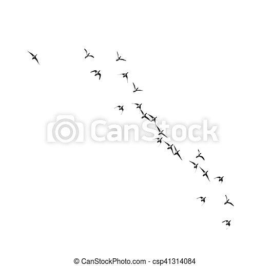 vlucht, witte , vogels, achtergrond - csp41314084