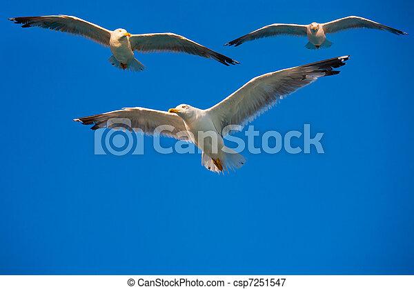 voando, céu, pássaros - csp7251547