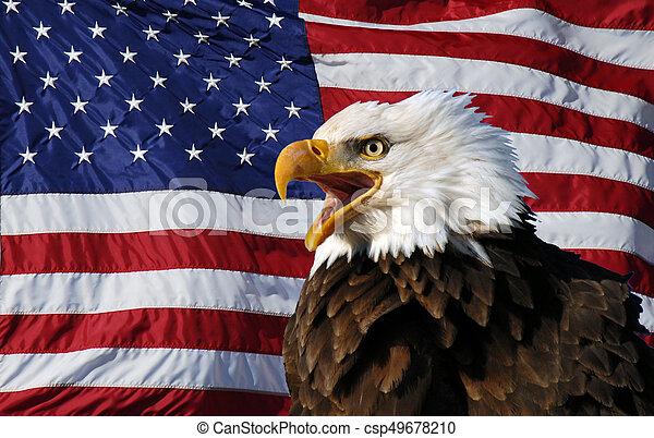 Vocal Bald Eagle American Flag A Vocalizing Adult Bald Eagle With
