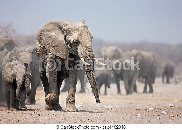 voetjes, elefant - csp4402318