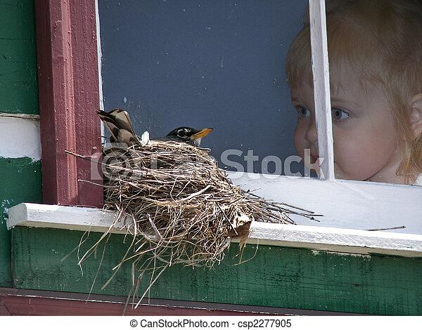 Vögel beobachten - csp2277905