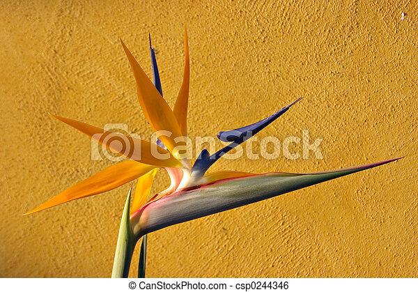 Vogel des Paradieses - csp0244346