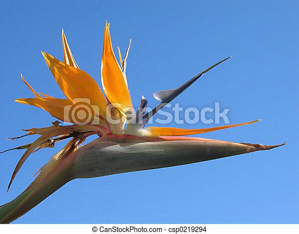 Vogel des Paradieses - csp0219294