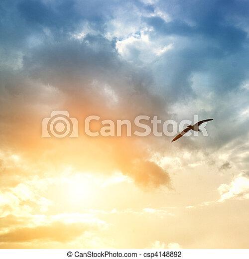 vogel, wolken, dramatisch - csp4148892