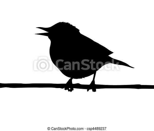 vogel, zweig, vektor, silhouette - csp4489237