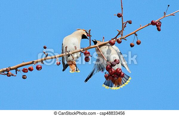 vogels, steppes - csp48833456