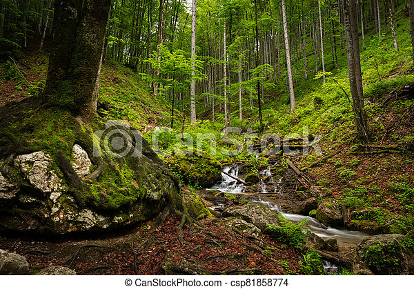 Vogelsang Gorge in Upper Austria on a cloudy day in summer - csp81858774