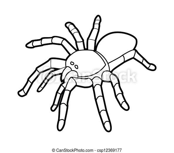 vogelspinne spinne