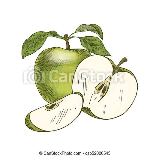 Voll, blatt, apfel farbe, fruit., grün, hälfte. Skizze,... EPS ...
