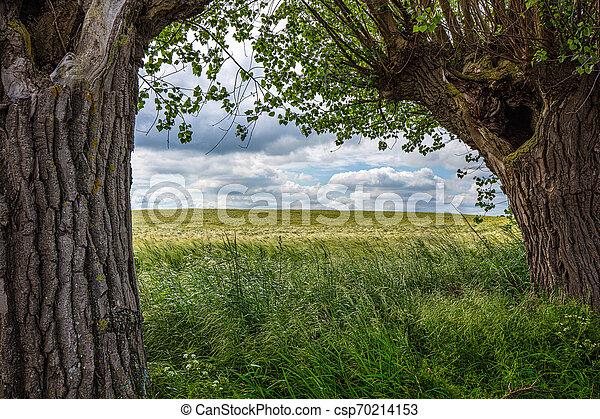 vordergrund, recht, altes , wolkenhimmel, feld, dramatisch, korn, oben, grünes gras, weiden, links - csp70214153