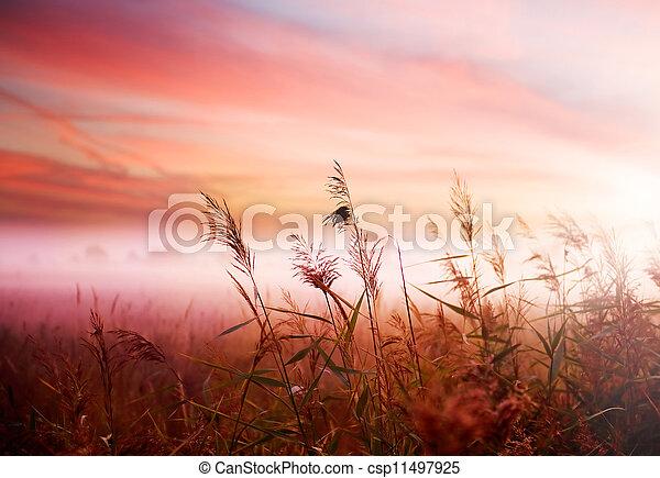 vroeg, nevelig, mist, landschap., morgen - csp11497925