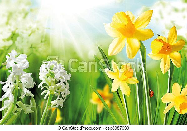 Bollen Bloeiend Voorjaar : Vrolijk lente bloembollen bulbs lente zonneschijn gele