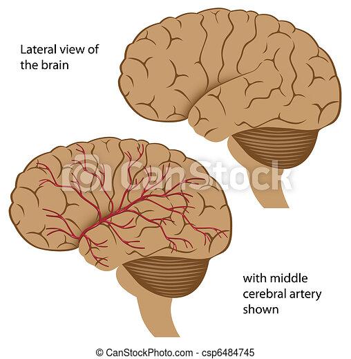 vue, cerveau, latéral - csp6484745