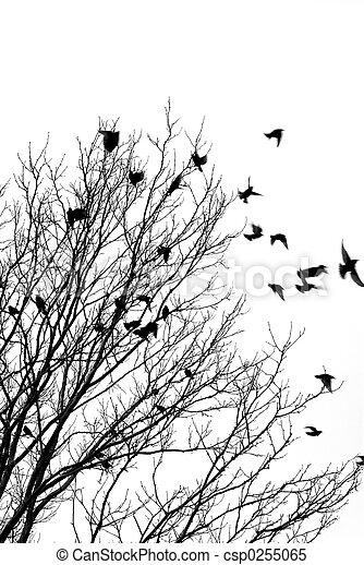 Pájaros voladores - csp0255065