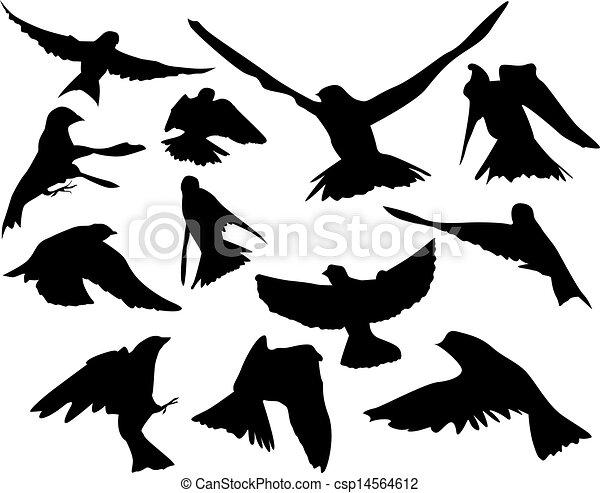Pájaros en vuelo - csp14564612