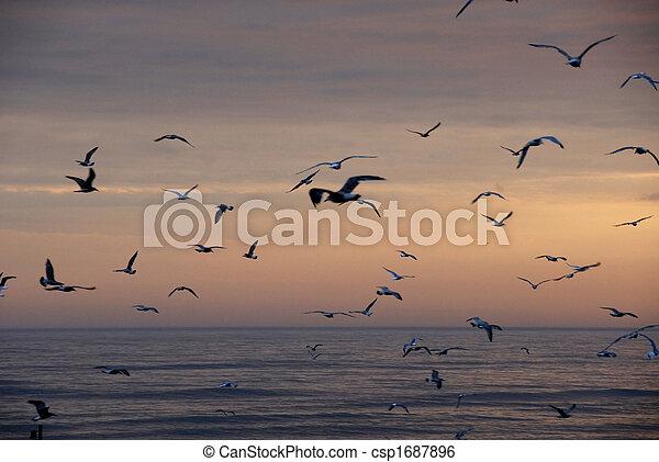 Pájaros en vuelo - csp1687896