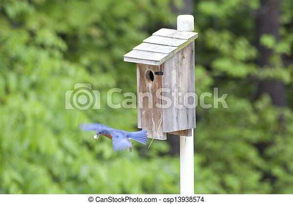 Bluebird oriental en vuelo - csp13938574