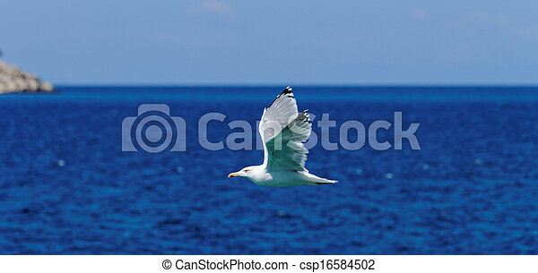 Gaviota blanca volando - csp16584502