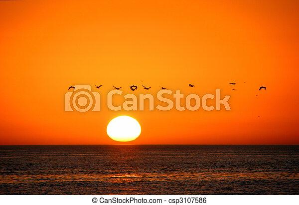 Pájaros en vuelo al amanecer de Sanibel Island Florida - csp3107586
