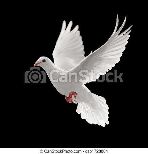 Pigoen volando - csp1728804
