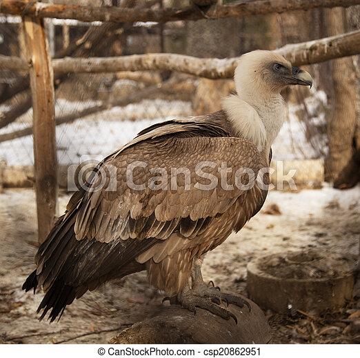 vulture - csp20862951
