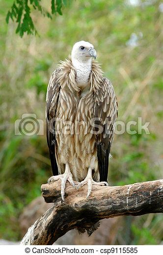 vulture - csp9115585